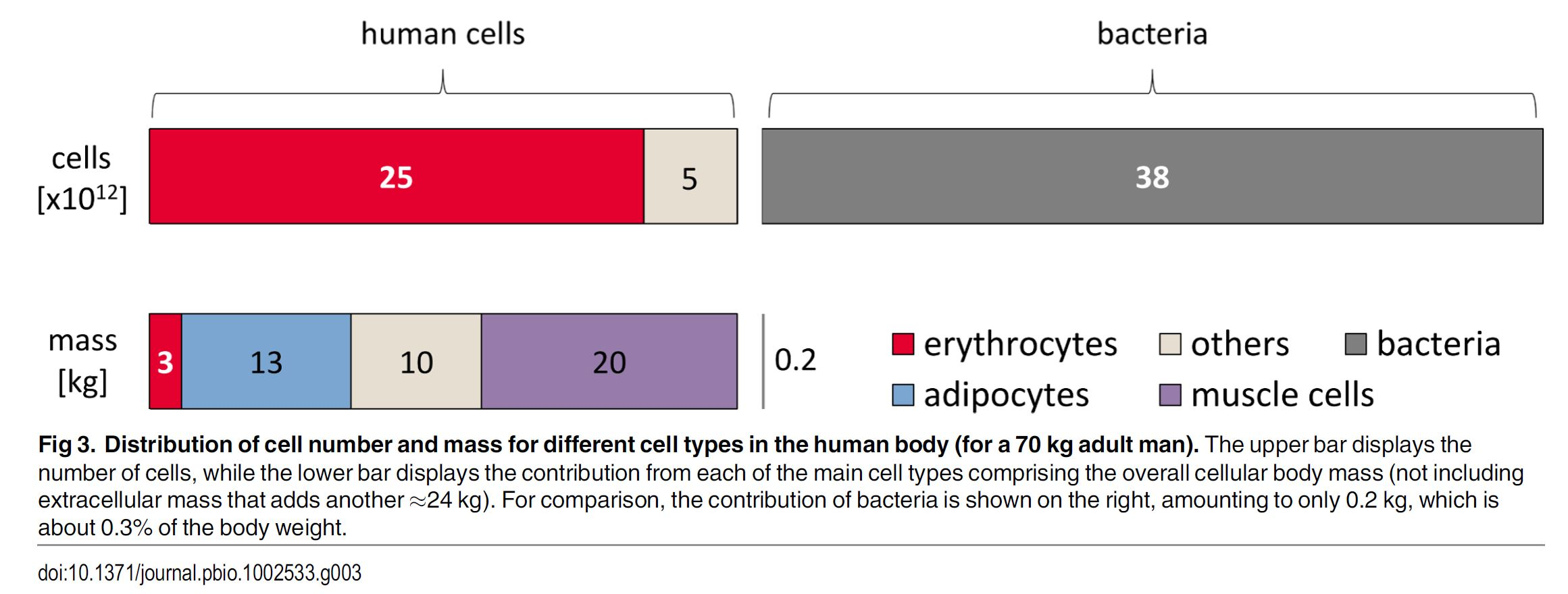 Bacterial vs Human cells in our body
